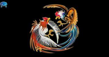 Sukses Raih Banyak Keuntungan Bermain Judi Sabung Ayam Online (1)